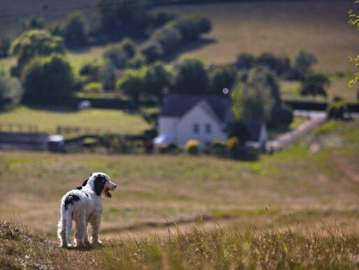 Przeprowadzka na wieś - poznaj 5 korzyści z mieszkania na wsi!