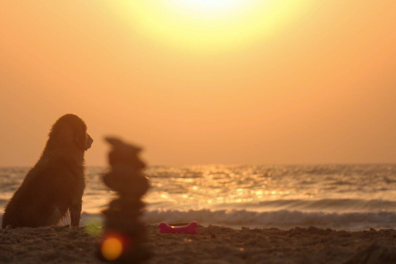 Jak ulżyć psu w czasie upału?